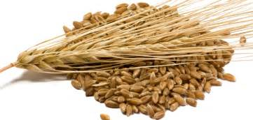 Lower cholesterol herbal picture 6