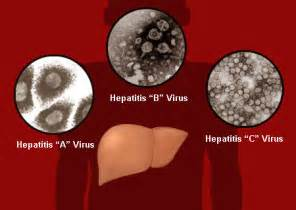 hepa is b liver damage picture 5