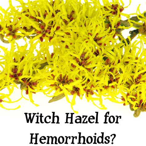 witch hazel for hemorrhoids picture 3