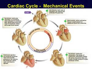 Heart blood flow order picture 6