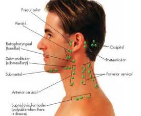 average size thyroid nodule picture 13