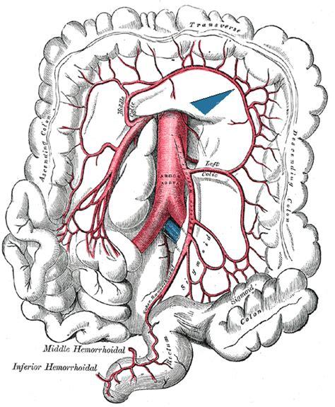 collodial silver ve thyroid nodule? picture 5