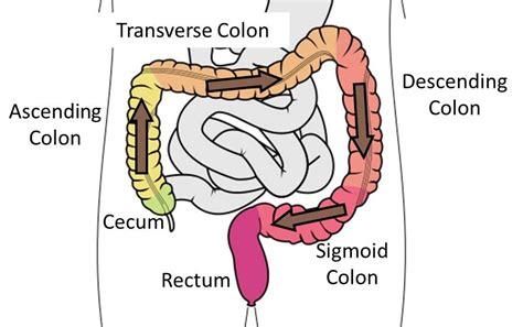 colon digestive picture 1