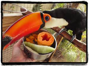 diet of a toucan picture 11