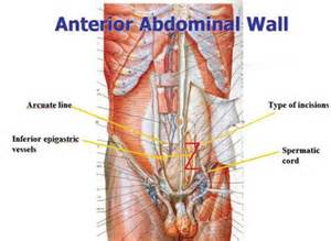 lower abdonimal muscle twitches picture 7