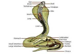 anaconda enlargement system picture 2