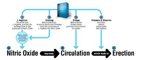 genital blood circulation picture 1