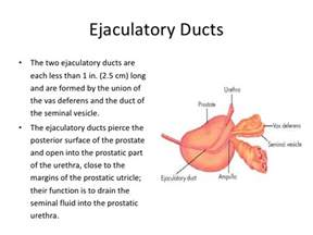 Prostate function picture 2