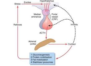 excessive secretion of growth hormone causes picture 10