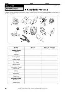 fungi kingdom lesson plan picture 17