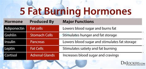 fat burning hormone picture 10