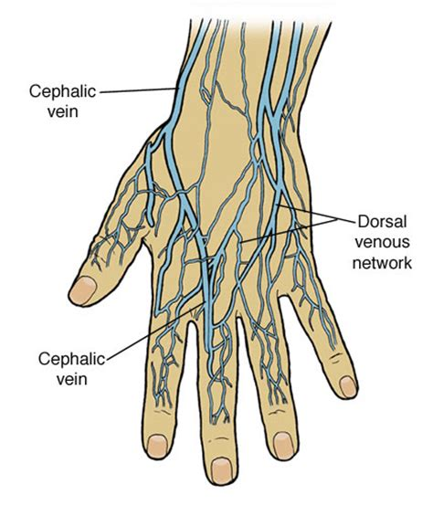 hitting the blood veins in hands what are picture 5