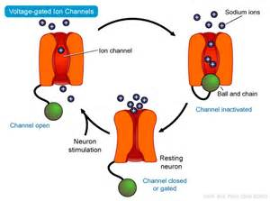 metal ions expelling from hair due to body picture 9