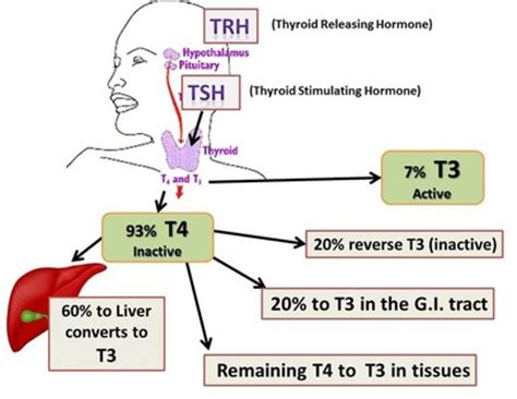 can giving thyroid medicine cause him to lose picture 2