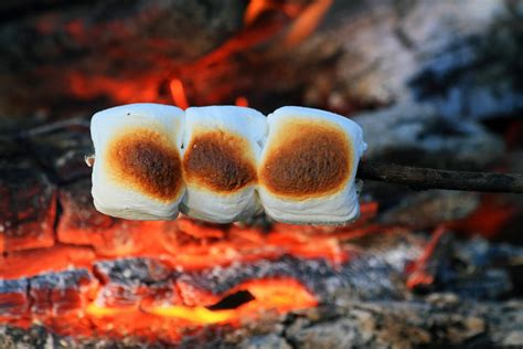 campfire marshmallows picture 14