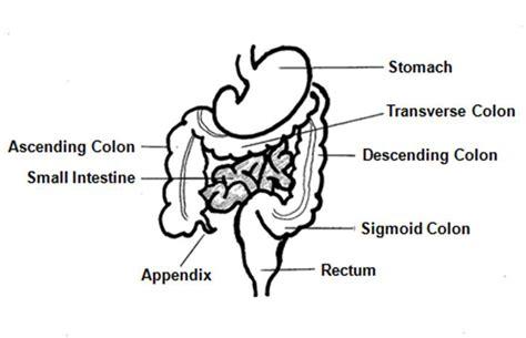 colon contactions picture 9