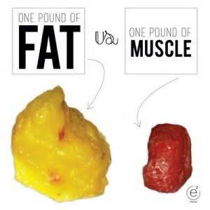 fat weight compared to muscle picture 13