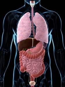 bladder leaking into abdomen picture 11