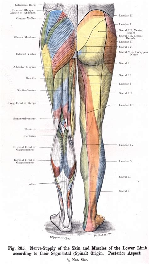 anatomy penis picture 1