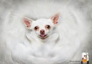 super fat white cellulite y picture 5