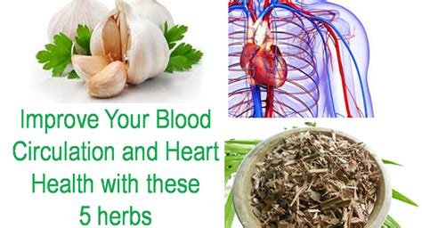 herb increase orus blood flow picture 5