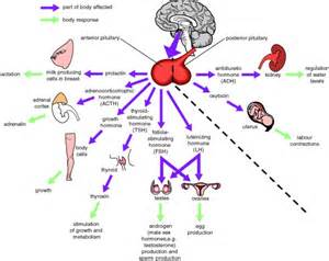 adnoma thyroid picture 13