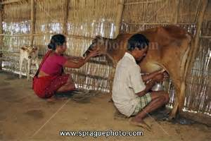 milking his prostate pdf picture 1