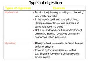 define chemical digestion picture 13