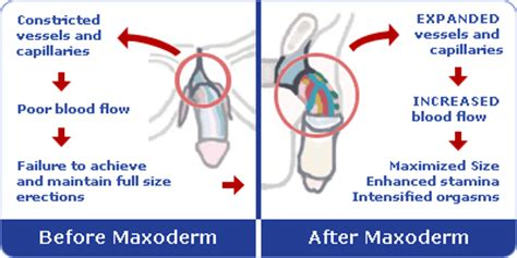 male blood flow picture 1