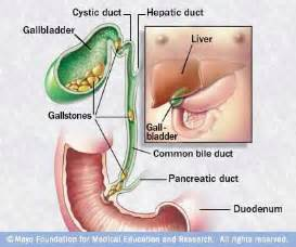 gallbladder and liver function picture 9