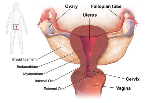 herbal abortion for 8 weeks pregnancy picture 3
