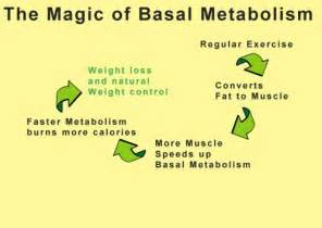 muscle metabolism calories picture 18