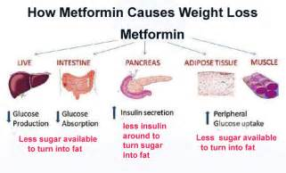 medformin and weight loss picture 1