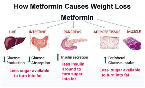 weight loss and metformin picture 1