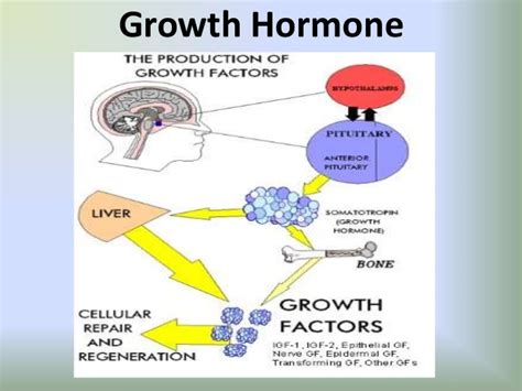 human growth hormone and weight lifting picture 1