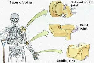 muscle bone and joint center picture 10