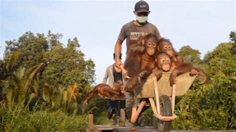 penis orang indonesia picture 5