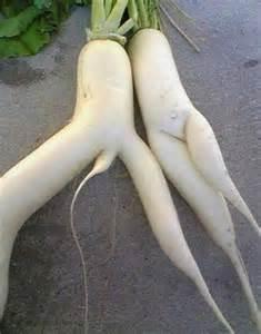 penis oddities picture 3