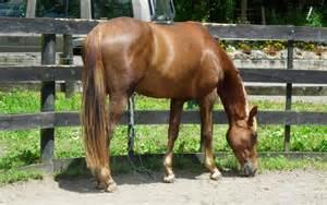 erection stallion picture 3
