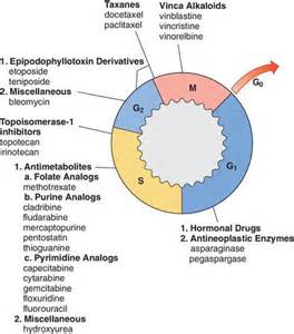 pictures of skin cancer cell cycle picture 1