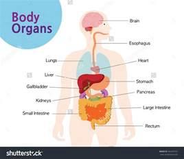 diagram gastrointestinal picture 6