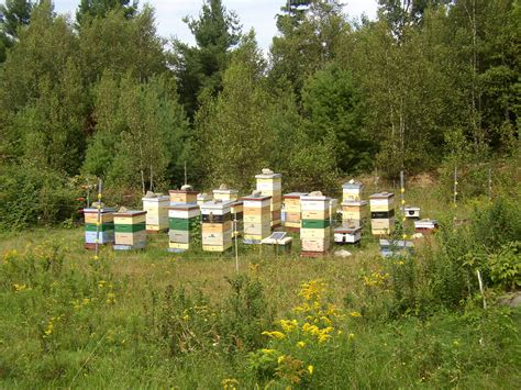 pictures of hives picture 11