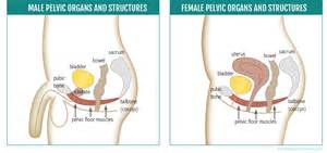 how to do pelvic muscle release picture 1