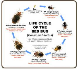 Bed bug relief picture 5