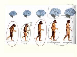 pheromones on humans picture 1