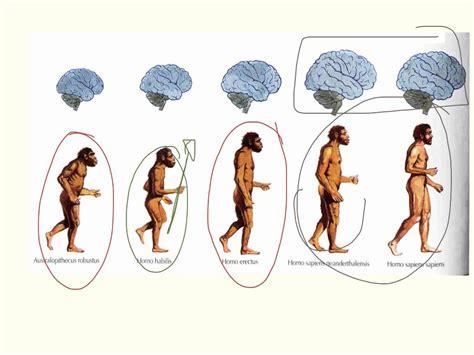 pheromones psychology definition picture 10
