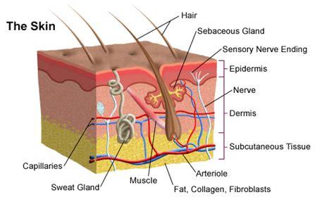 acne intestinal picture 3