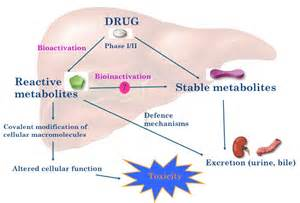 drugs that are metabolized by the liver picture 14