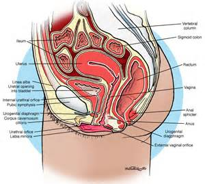 drawing of catheter in women's bladder picture 1
