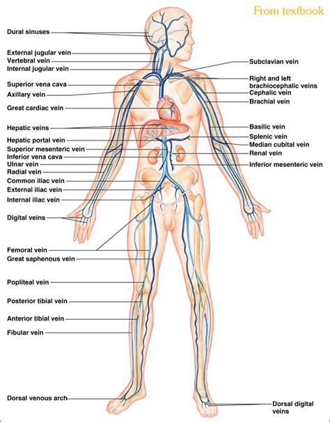 heart diagram picture 1